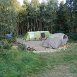 A forest tent pitch