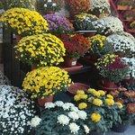 Tienda de flores en esta fecha de todos los santos.