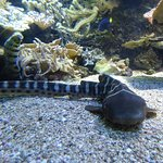 Billede af Aquarium du Cap d'Agde
