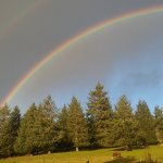 Double rainbow over the pasture with cows
