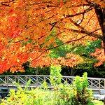 Little bridge at Kent Falls