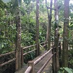 Rainforest Adventures Foto