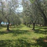 Photo of Trattoria del Sole
