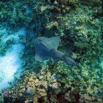 Photo de Faraana Reef Resort