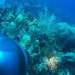 Foto Doctor Dive Costa Maya