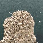 RSPB Bempton Cliffs Photo
