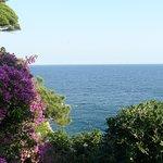 bougainvilliers et vue sur la méditerranée