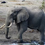 Tembe Elephant reserve is 40kms away. You MUST have a 4x4