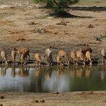 Nyala at Tembe waterhole