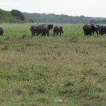 Elles in Tembe