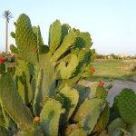 Photo de Panorama Bungalows Resort El Gouna