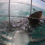 Marine Dynamics Foto