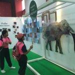 Thai Elephant Conservation Center Foto