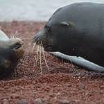 Sea Lions upclose in the Galapagos - just one of many species to see there.