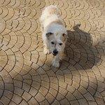 """Gaspare, the friendly """"watch"""" dog of Villa Sogno."""