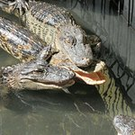 GatorWorld Parks of Florida Inc.