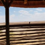 Photo of Suricate Kalahari Tented Lodge