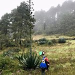 The agaves were HUGE.