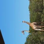 Amakhala Safari Lodge resmi