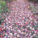 Fall leaves blanketing a pathway