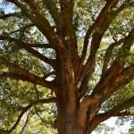 The park had many old and beautiful trees to photograph..