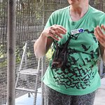 Jenny with a young Spectacled Flying Fox