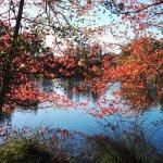 Foto de Virginia Lake