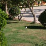 Photo de Amwaj Oyoun Hotel & Resort