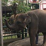 Photo of Mason Elephant Lodge