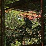 Photo de Angkor Centre for Conservation of Biodiversity