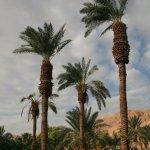 Photo of Ein Gedi Hotel