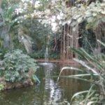 Orchid Garden Foto