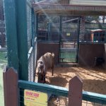 Lots of animals from the region to see and learn about.