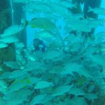 Salt Pier Fish