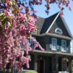 The O'Keefe Mansion and beautiful cherry blossoms