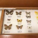 Museo Naturalistico Francesco Minà Palumbo