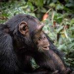 Photo de Kibale National Park