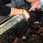 petting starfish and learning about them