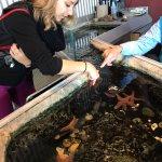 petting starfish!