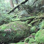Photo de Shiratani Unsuikyo Valley