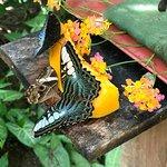 Photo de Kuang Si Falls Butterfly Park