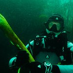 Diving in kelp forest