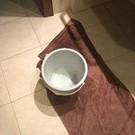 The bucket that the maid left for 4 days