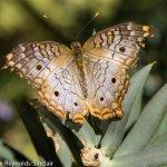 ' ' from the web at 'https://media-cdn.tripadvisor.com/media/photo-l/11/2c/69/b6/butterfly-habitat-whiter.jpg'
