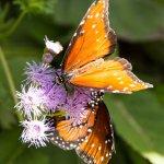 ' ' from the web at 'https://media-cdn.tripadvisor.com/media/photo-l/11/2c/69/ba/butterfly-habitat-queens.jpg'