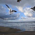 Photo de Pelican Shores Inn