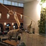 Photo of Museum of Natural History