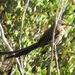 Foto di Avian Leisure