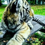Foto de Jungle Cat World Wildlife Park