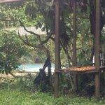 Photo of Quistacocha Zoo